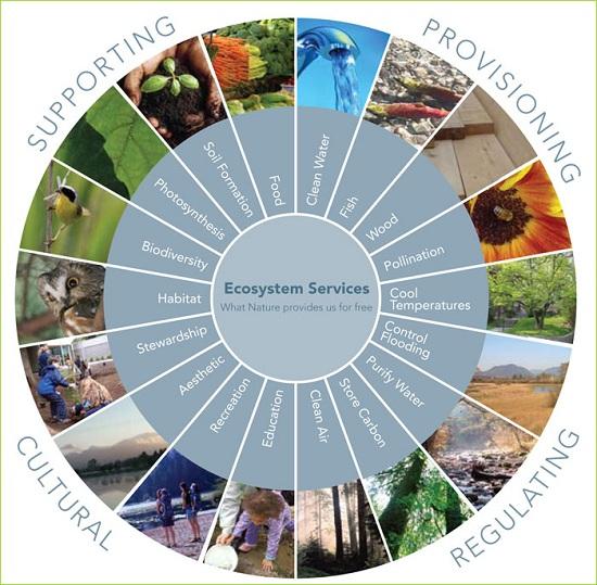 ecosystem-services-diagram